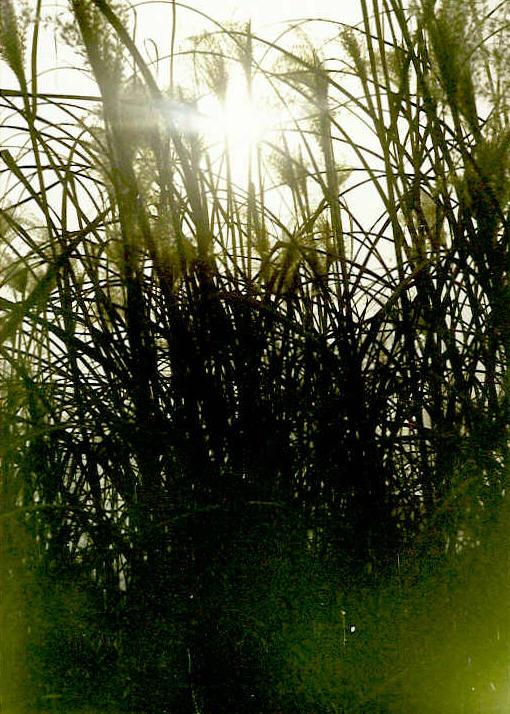 nature020.jpg